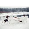 Aiamööbli komplekt Bavaria 8 valge 4 PESAPUU.jpg